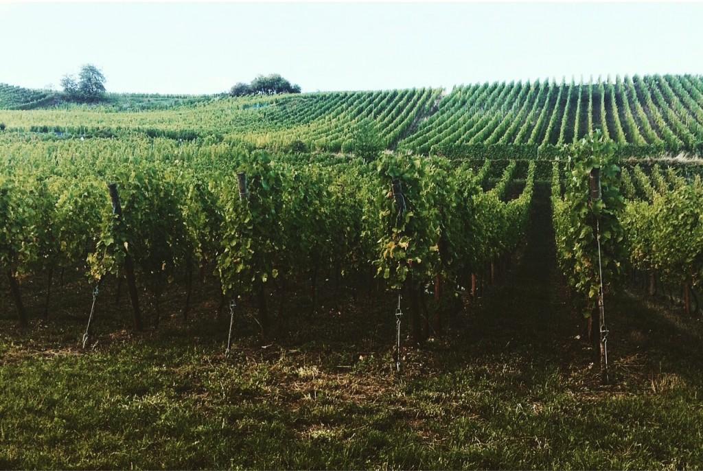 Riquewihr est un village situé sur la Route des Vins d'Alsace